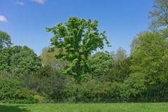 Hierba verde, verde del parque imagen de archivo