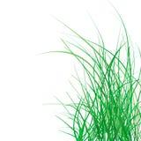 Hierba verde del resorte Fotografía de archivo libre de regalías
