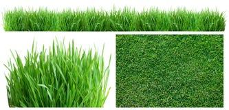 Hierba verde del resorte. Foto de archivo libre de regalías