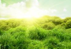 Hierba verde del resorte Fotografía de archivo