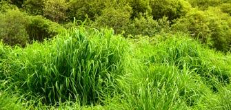Hierba verde del resorte Imagen de archivo libre de regalías