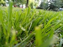 Hierba verde del resorte Foto de archivo libre de regalías