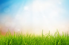 Hierba verde del resorte fresco y cielo azul. Imagen de archivo libre de regalías