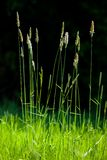Hierba verde del verano imágenes de archivo libres de regalías