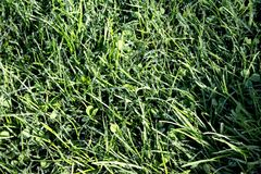 Hierba verde densa Fotografía de archivo