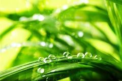 Hierba verde, descensos del agua Imagenes de archivo