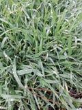 Hierba verde después de la lluvia fotografía de archivo