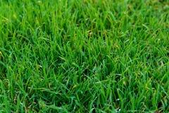 Hierba verde después de la lluvia Fotos de archivo