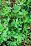 Hierba verde después de la lluvia Fotografía de archivo libre de regalías