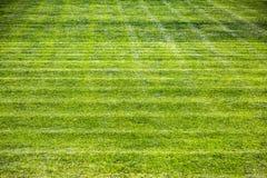 Hierba verde detalladamente Imagen de archivo
