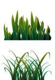 Hierba verde dos stock de ilustración