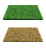 Hierba verde e hierba seca Foto de archivo