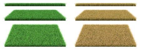 Hierba verde e hierba seca Fotografía de archivo libre de regalías