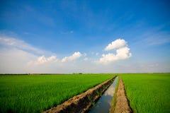 Hierba verde, el cielo azul Imagen de archivo libre de regalías
