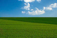 Hierba verde, el cielo azul y nubes blancas Imagen de archivo