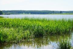Hierba verde en agua Imágenes de archivo libres de regalías