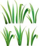 Hierba verde en blanco Fotos de archivo libres de regalías