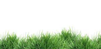 Hierba verde en blanco fotografía de archivo libre de regalías