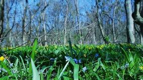 Hierba verde en bosque del resorte metrajes