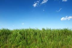 Hierba verde en cielo azul claro Fotos de archivo libres de regalías