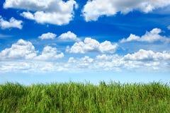 Hierba verde en cielo azul de la nube Fotografía de archivo