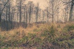 Hierba verde en el bosque en el amanecer Imagenes de archivo
