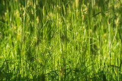 Hierba verde en el campo Foto de archivo libre de regalías