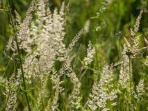 Hierba verde en el día soleado del verano imagen de archivo