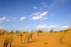 Hierba verde en el desierto Imagen de archivo libre de regalías