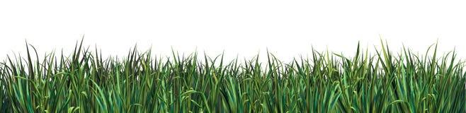 Hierba verde en el fondo blanco fotos de archivo
