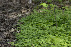 Hierba verde en el parque Imágenes de archivo libres de regalías