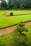 Hierba verde en el parque fotos de archivo