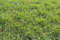 Hierba verde en el prado Imágenes de archivo libres de regalías