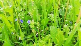 Hierba verde en el prado almacen de video