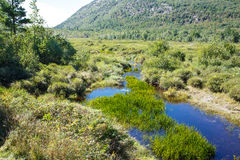 Hierba verde en el río azul de Maine Fotos de archivo