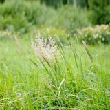 Hierba verde en el viento imágenes de archivo libres de regalías