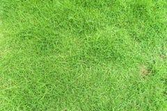 Hierba verde en fondo Imagen de archivo libre de regalías