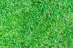 Hierba verde en fondo Fotografía de archivo libre de regalías