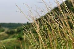 Hierba verde en la colina de Rajasthán Fotografía de archivo libre de regalías
