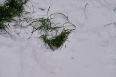 Hierba verde en la nieve imagenes de archivo