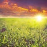 Hierba verde en la puesta del sol Fotografía de archivo