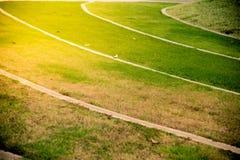 Hierba verde en la salida del sol Fotografía de archivo libre de regalías