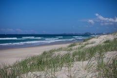 Hierba verde en las dunas de arena en paraíso de las personas que practica surf Imagen de archivo libre de regalías