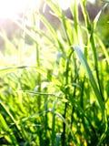 Hierba verde en luz del sol foto de archivo