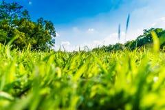Hierba verde en parque hermoso sobre el cielo azul Foto de archivo
