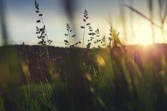 Hierba verde en puesta del sol imagenes de archivo