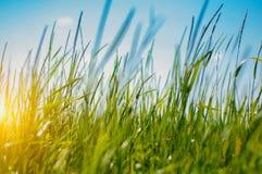 Hierba verde en un campo grande Imagenes de archivo