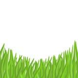 Hierba verde en un fondo blanco Jardín del ejemplo del vector Foto de archivo