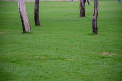Hierba verde en un parque con los árboles simétricos en el fondo fotografía de archivo