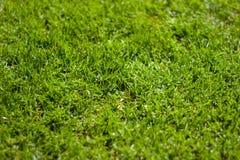 Hierba verde enorme Imagenes de archivo